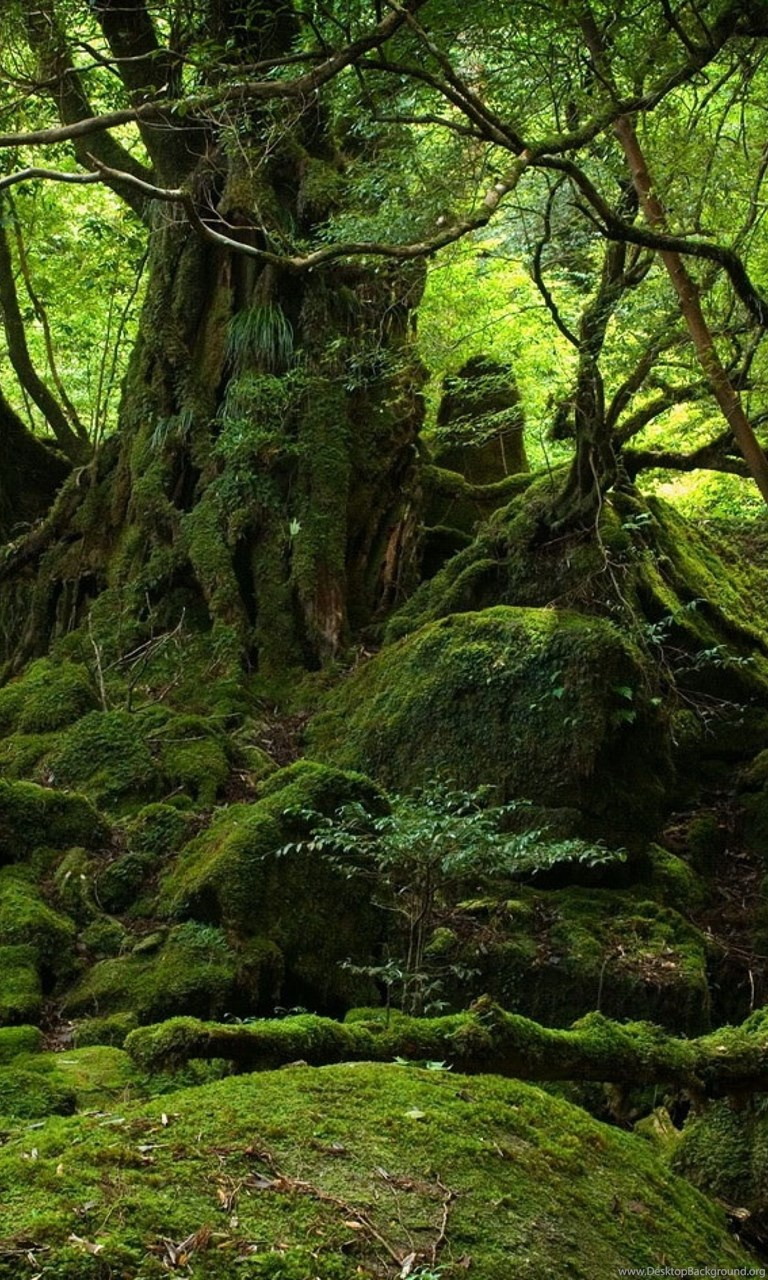 4k Ultra Hd Jungle Wallpapers Hd Desktop Backgrounds Yakushima 768x1280 Download Hd Wallpaper Wallpapertip