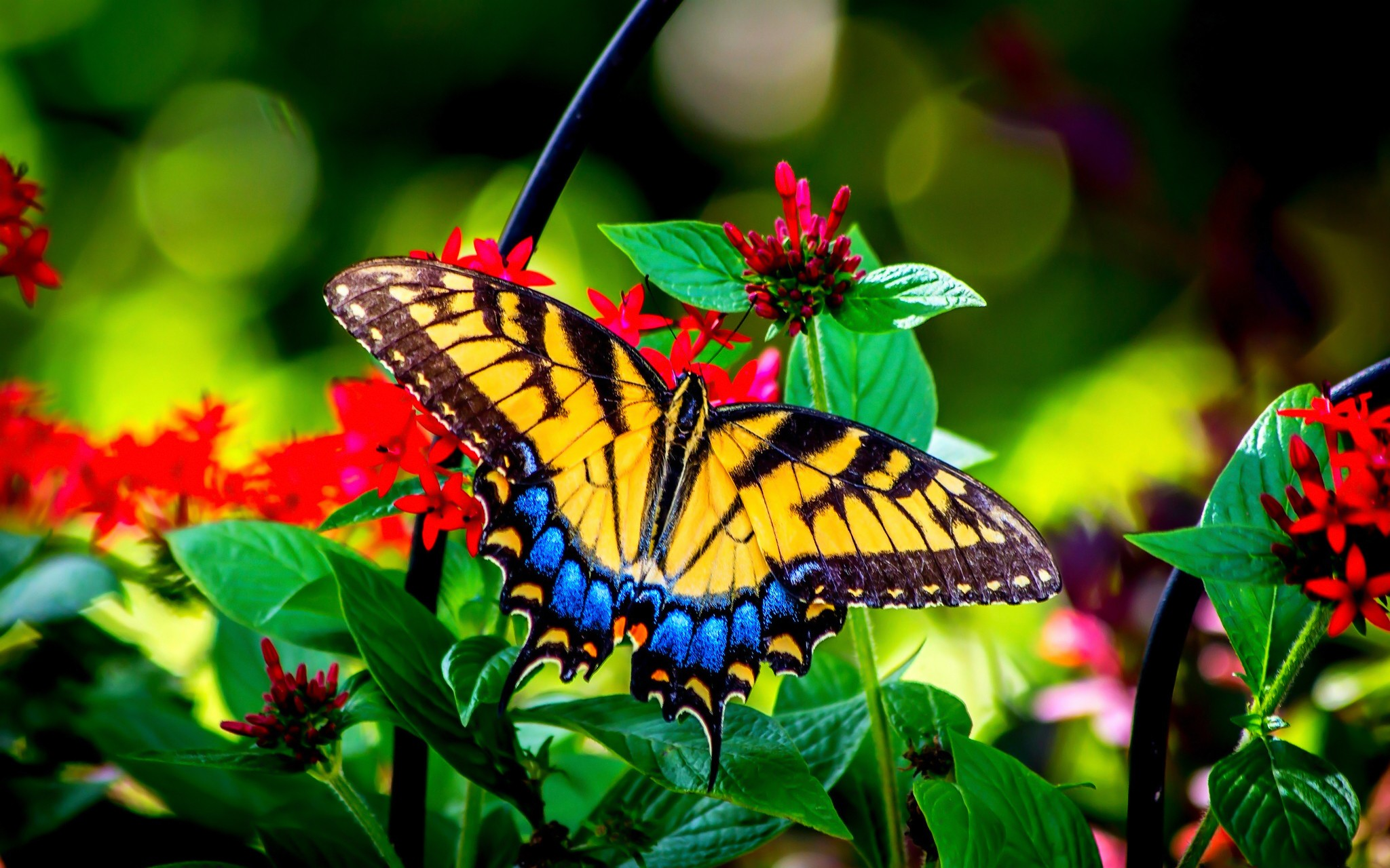 Beautiful Butterfly In Nature 2048x1280 Download Hd Wallpaper Wallpapertip,Tapered Rectangular Lamp Shades Uk