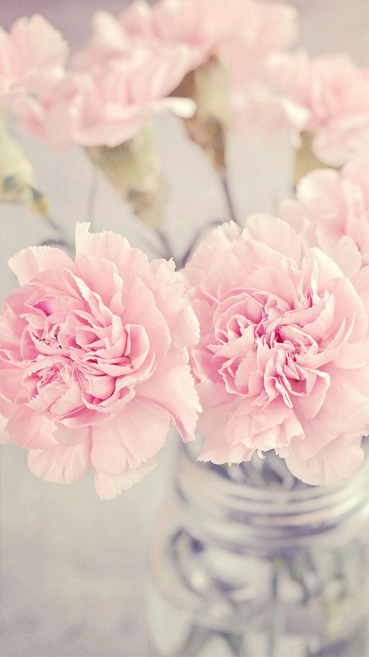Iphone Sfondo Fiore Rosa Carta Da Parati Fiore Telefono 736x1308 Wallpapertip