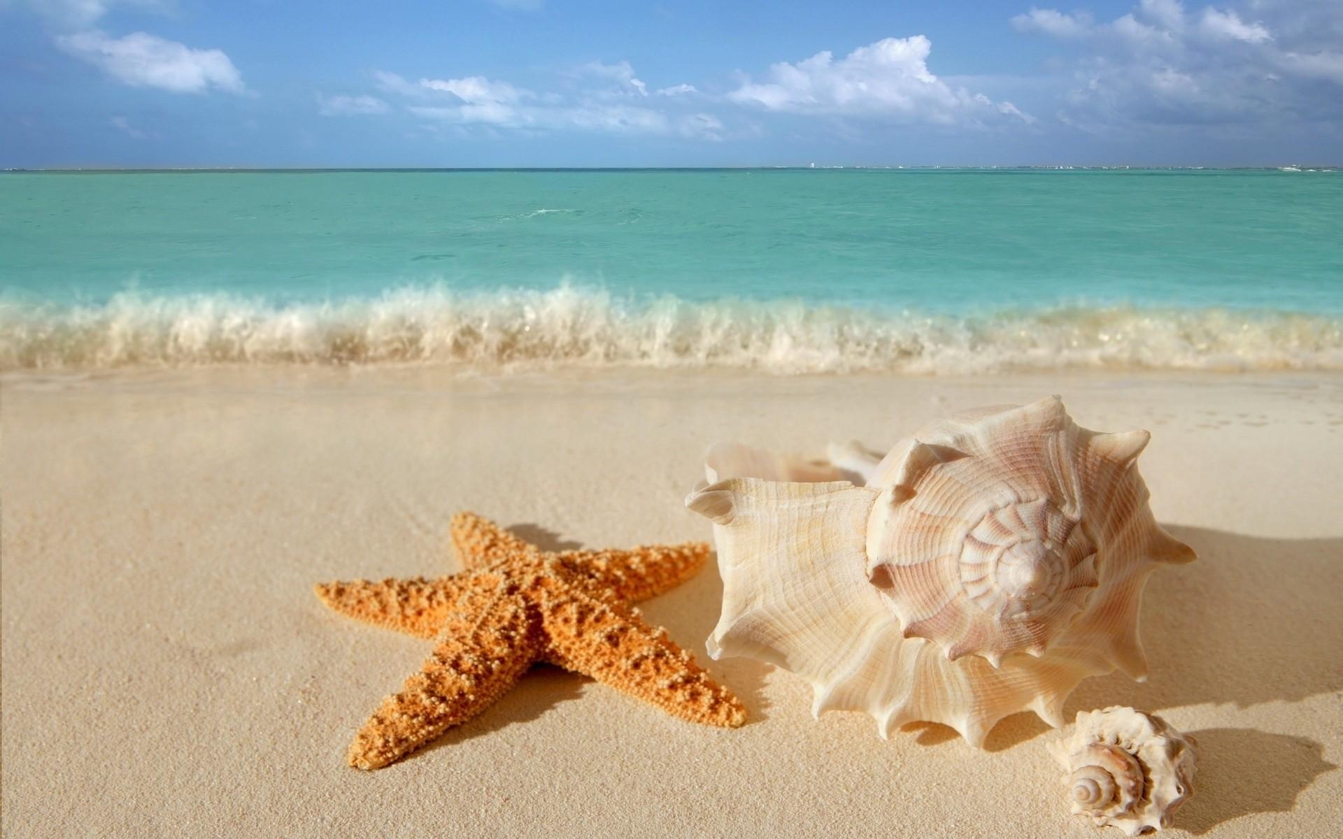 ヒトデと貝殻の浜辺 海辺をテーマにした壁紙 1600x1000 Wallpapertip
