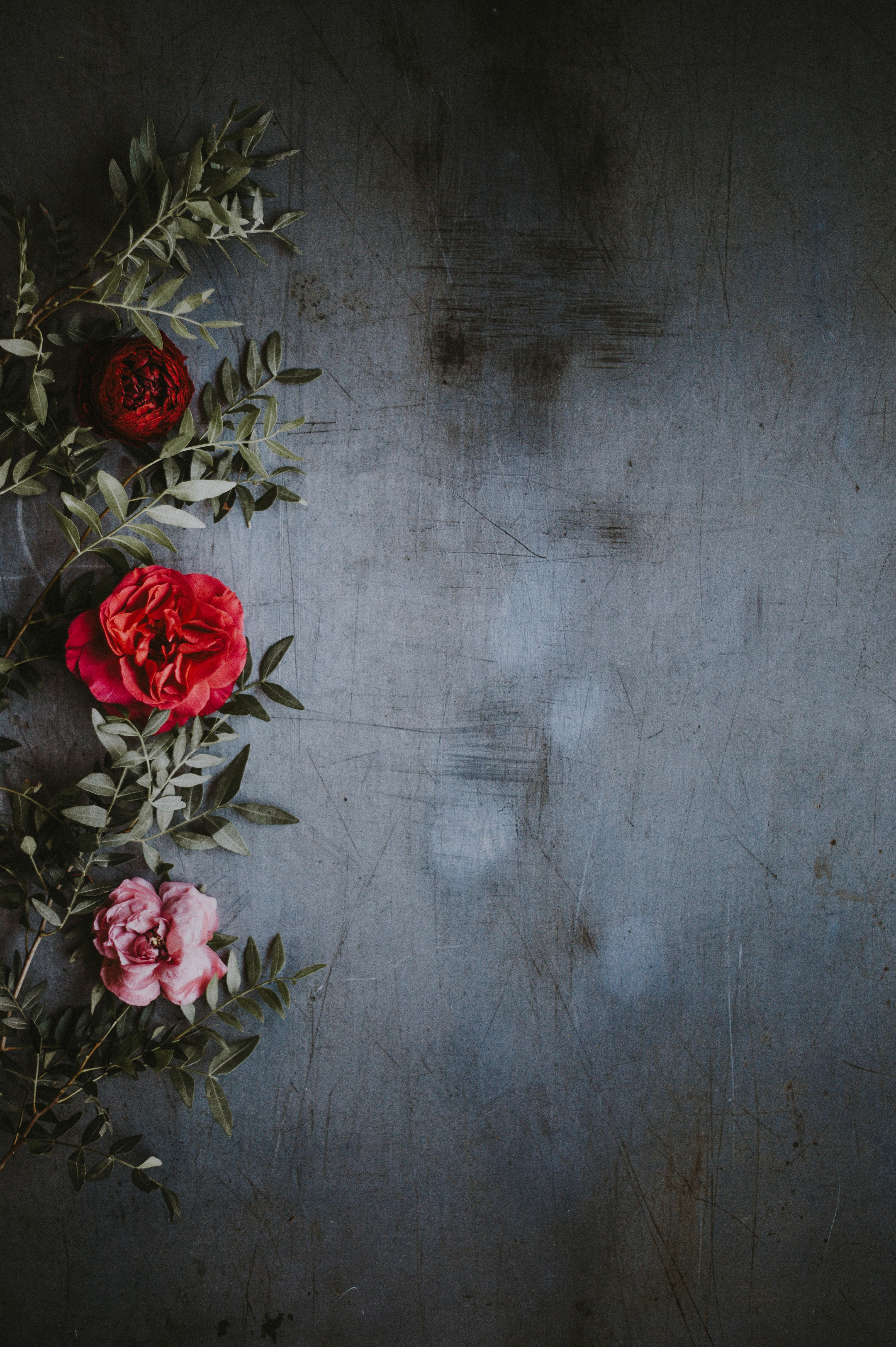 Photography Background Images Hd 3216x4832 Download Hd Wallpaper Wallpapertip