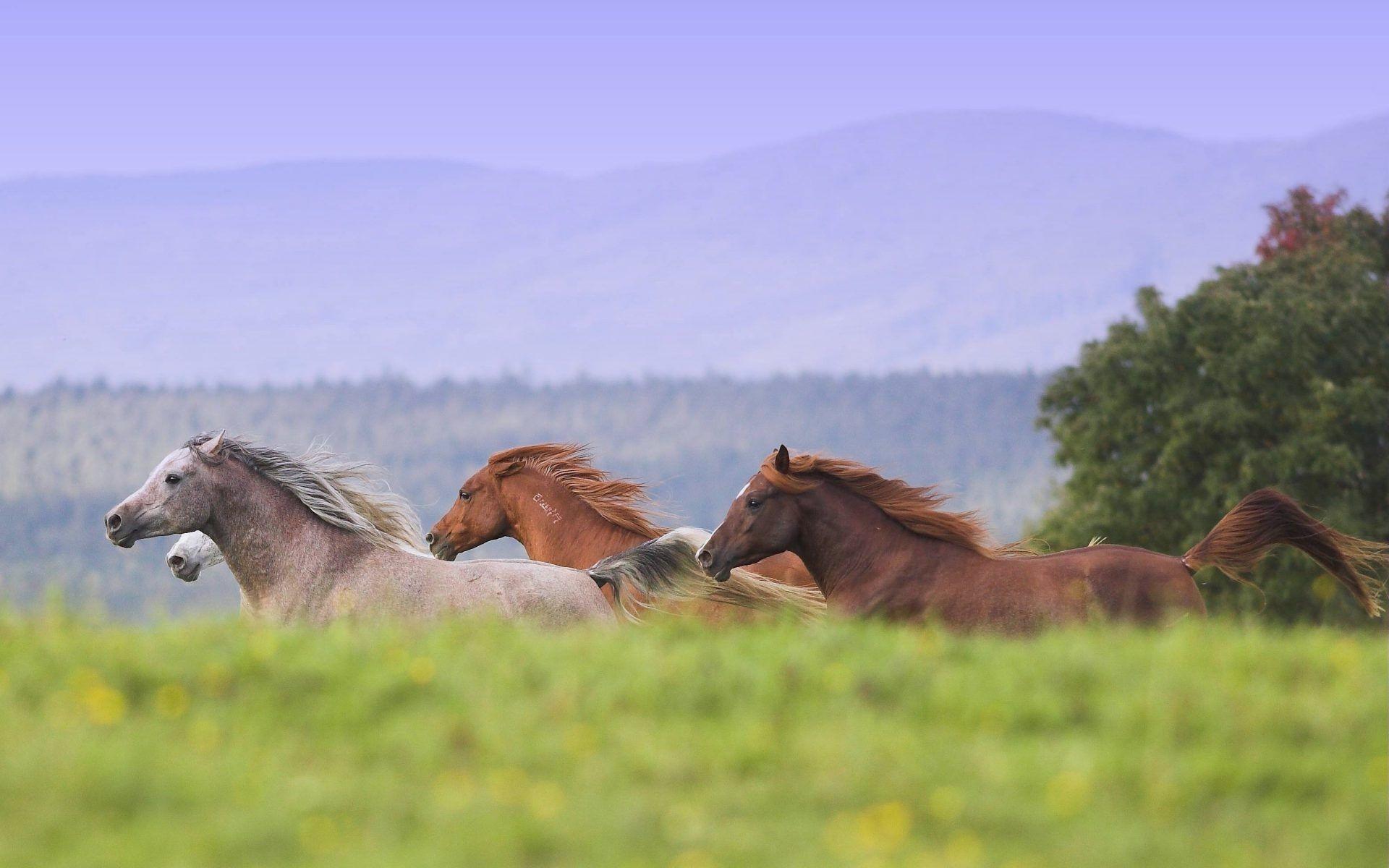 Src Wild Horses Wallpaper Samsung Data Id Stallion 1920x1200 Download Hd Wallpaper Wallpapertip