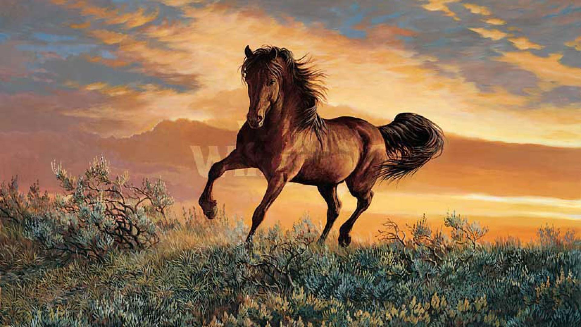 Wild Horses Mustang Data Src Large Wild Horse Wallpaper Wild Horses Wallpaper 3d 1920x1080 Download Hd Wallpaper Wallpapertip