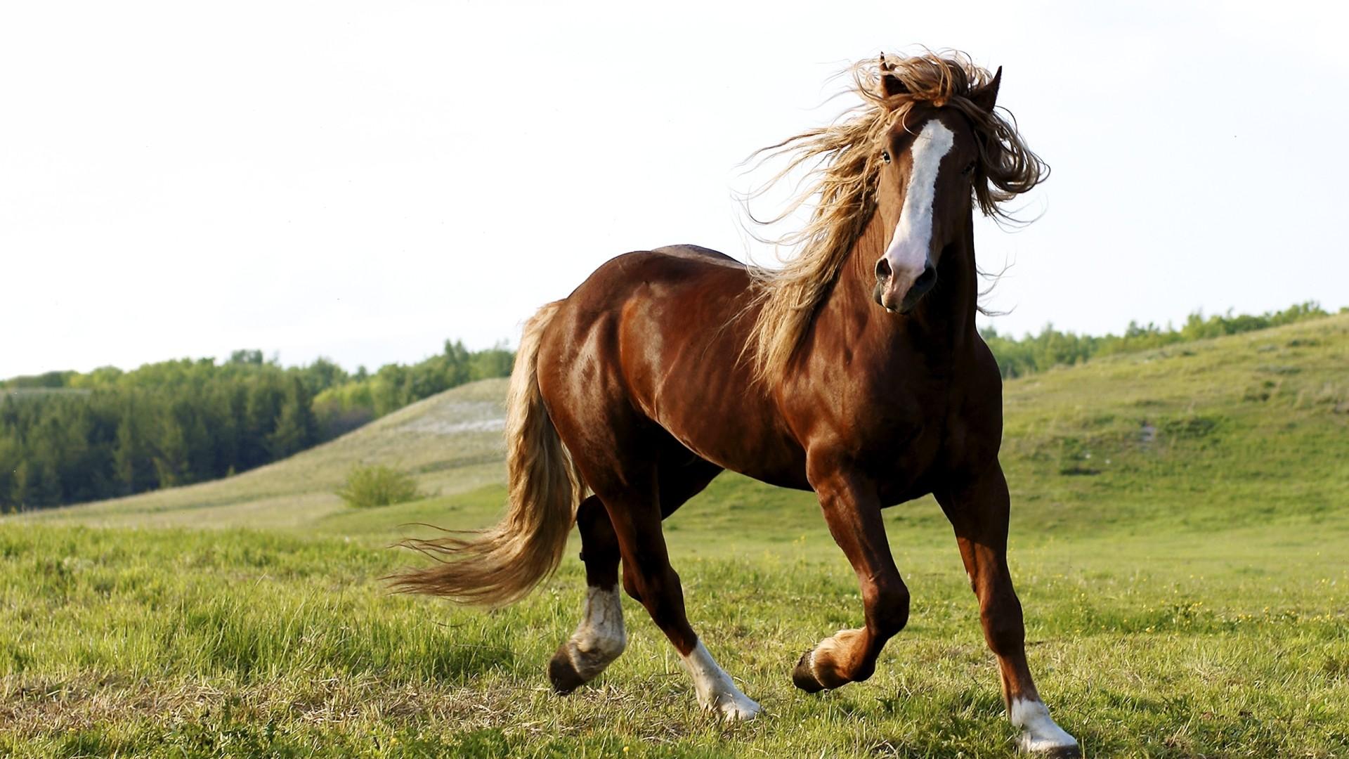 Wild Horse Full Hd Wallpaper Horse Riding Background Hd 1920x1080 Download Hd Wallpaper Wallpapertip