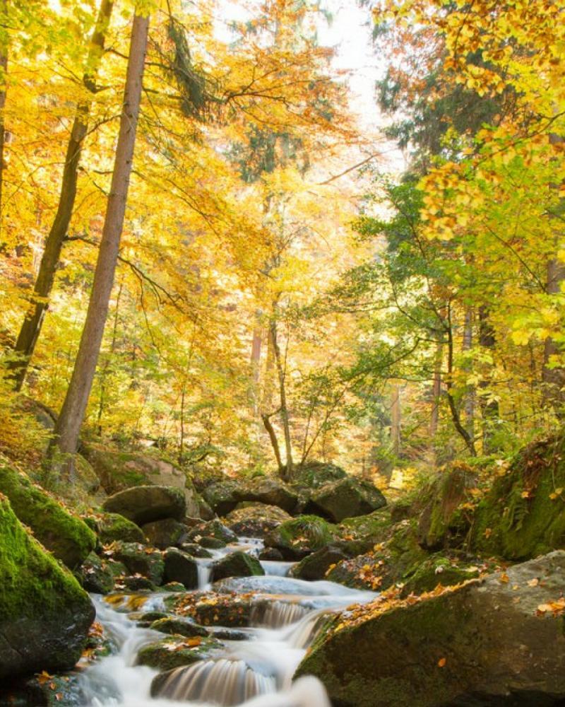 descargar foto pemandangan alam   alam wallpaper   20x20 ...
