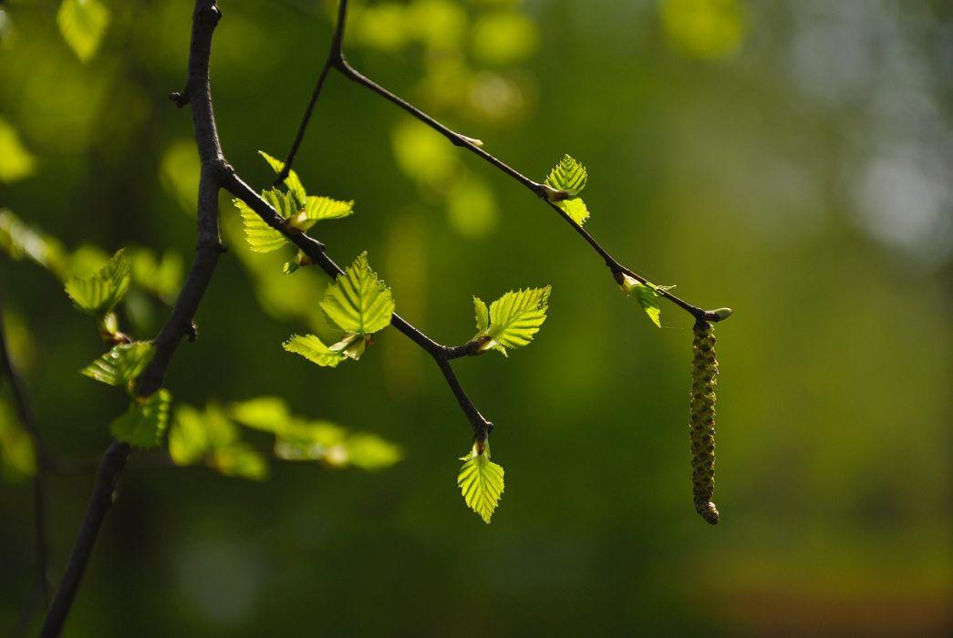 Nature Hd Blur Background 768x514 Download Hd Wallpaper Wallpapertip