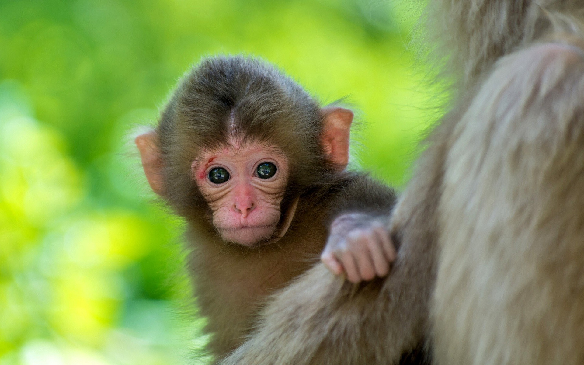 Cute Monkey Baby Animal Wallpaper Data Src Vertical Cute Baby Animals Hd 1920x1200 Download Hd Wallpaper Wallpapertip