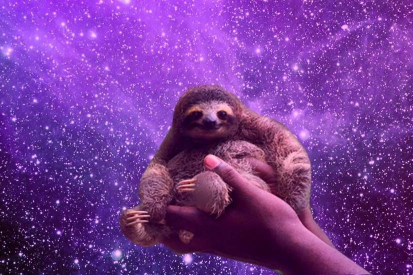 Free Download Sloth Wallpapers Pygmy Sloths Endangered 825x550 Download Hd Wallpaper Wallpapertip