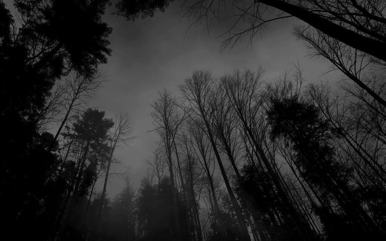 Black Forest Wallpapers 5 Download Dark Forest Background Aesthetic 1280x800 Download Hd Wallpaper Wallpapertip