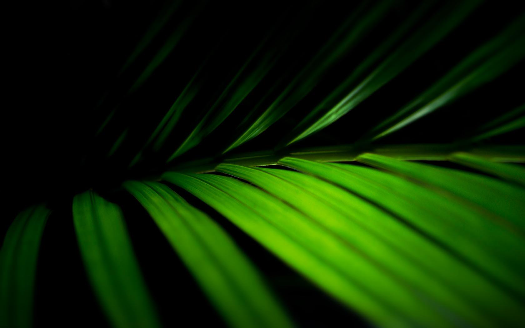 Palm Fronds Vista Desktop Background Pixel Popular Palm Branch Palm Sunday Background 1680x1050 Download Hd Wallpaper Wallpapertip