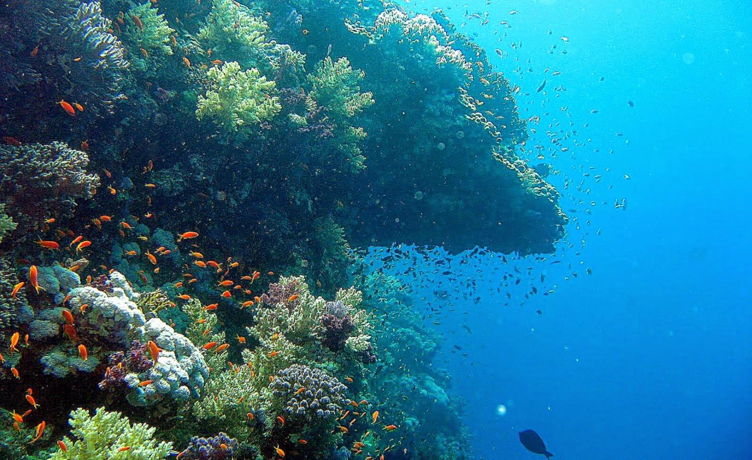 странице изображения фото океана под водой обои