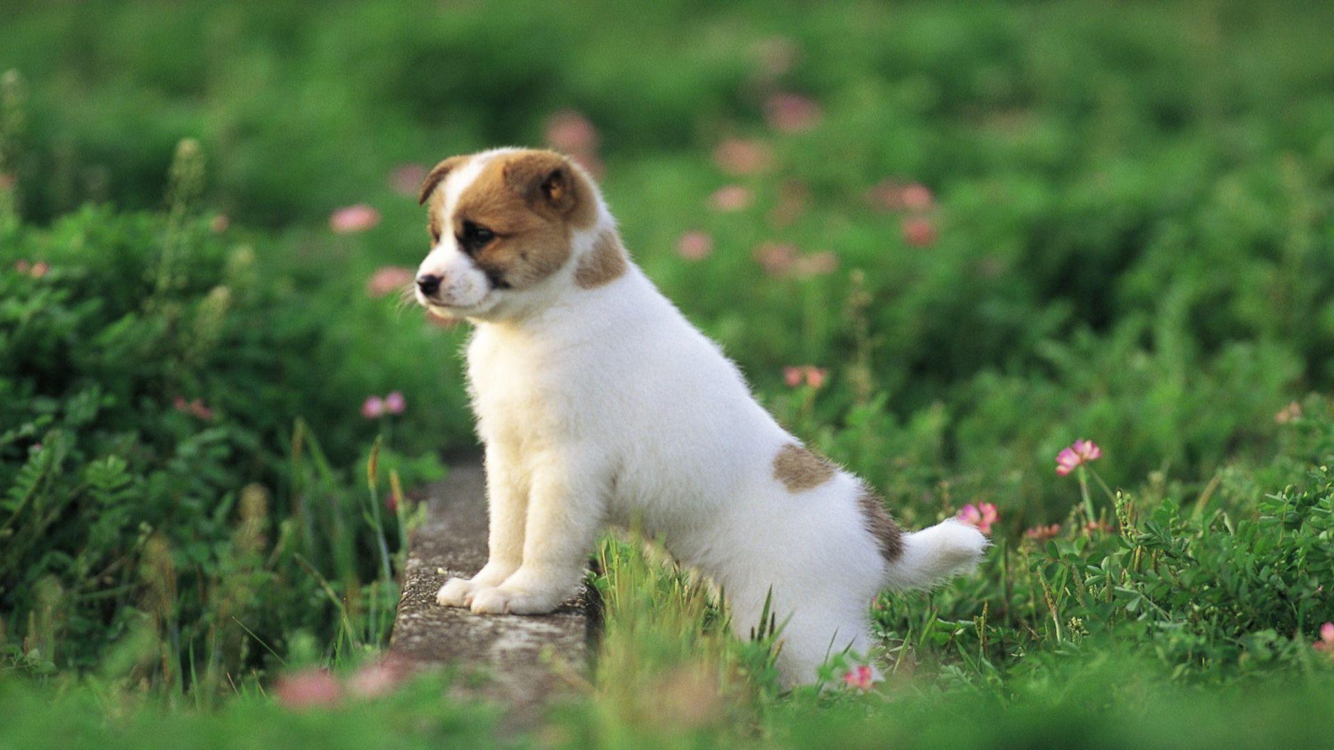 Wallpaper Hd Cute Puppies Cute Puppy 1920x1080 Download Hd Wallpaper Wallpapertip