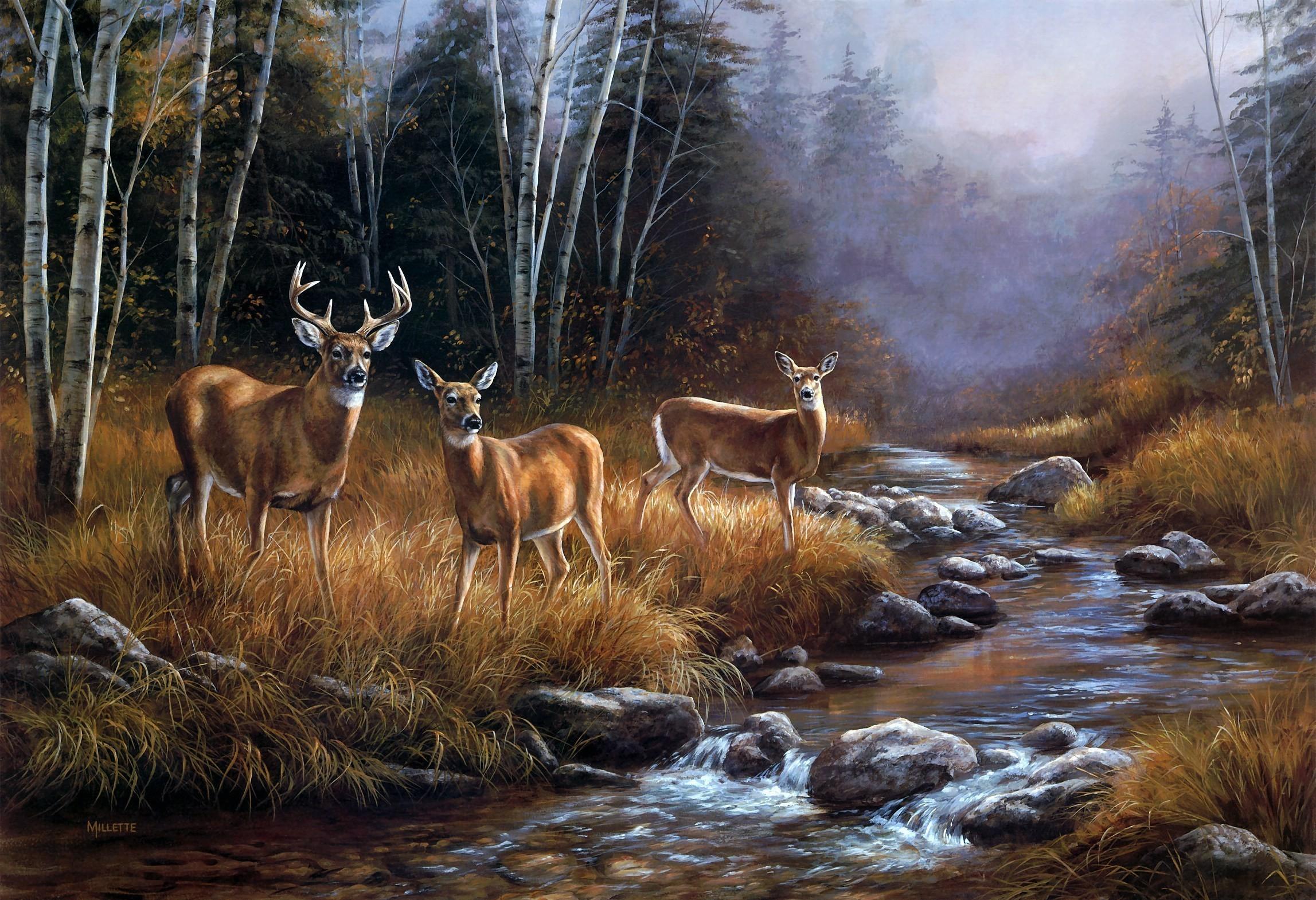 Widescreen Wallpaper Deer Src Cool Whitetail Deer 2295x1570 Download Hd Wallpaper Wallpapertip