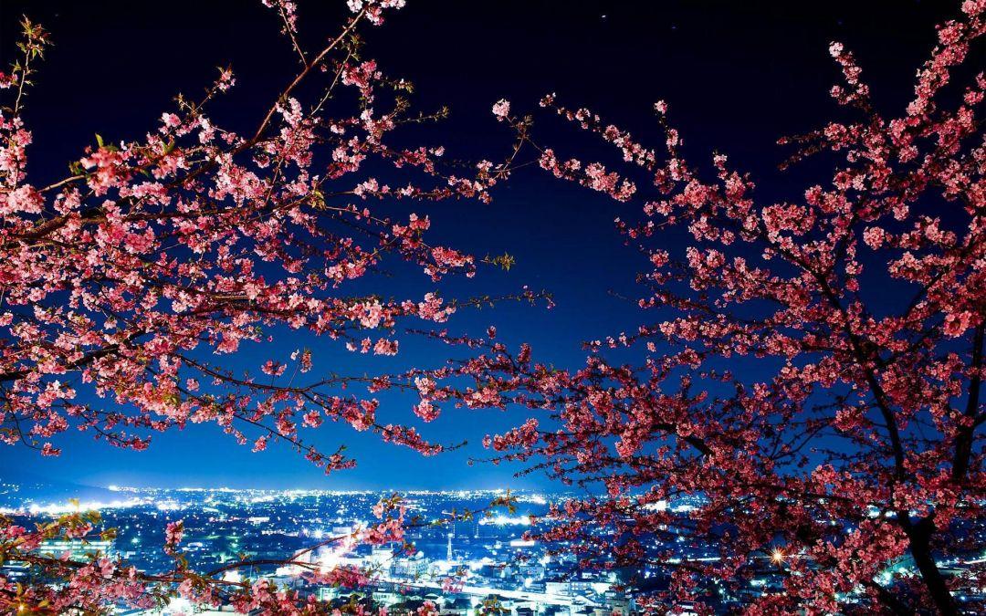 Japanese Anime City Tokyo Japan At Night Hd 1080x675 Download Hd Wallpaper Wallpapertip