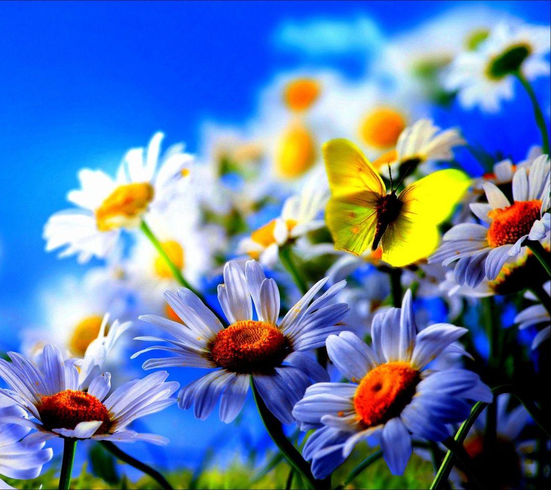 Beautiful Phone Wallpaper Animated Hd 1080x960 Download Hd Wallpaper Wallpapertip