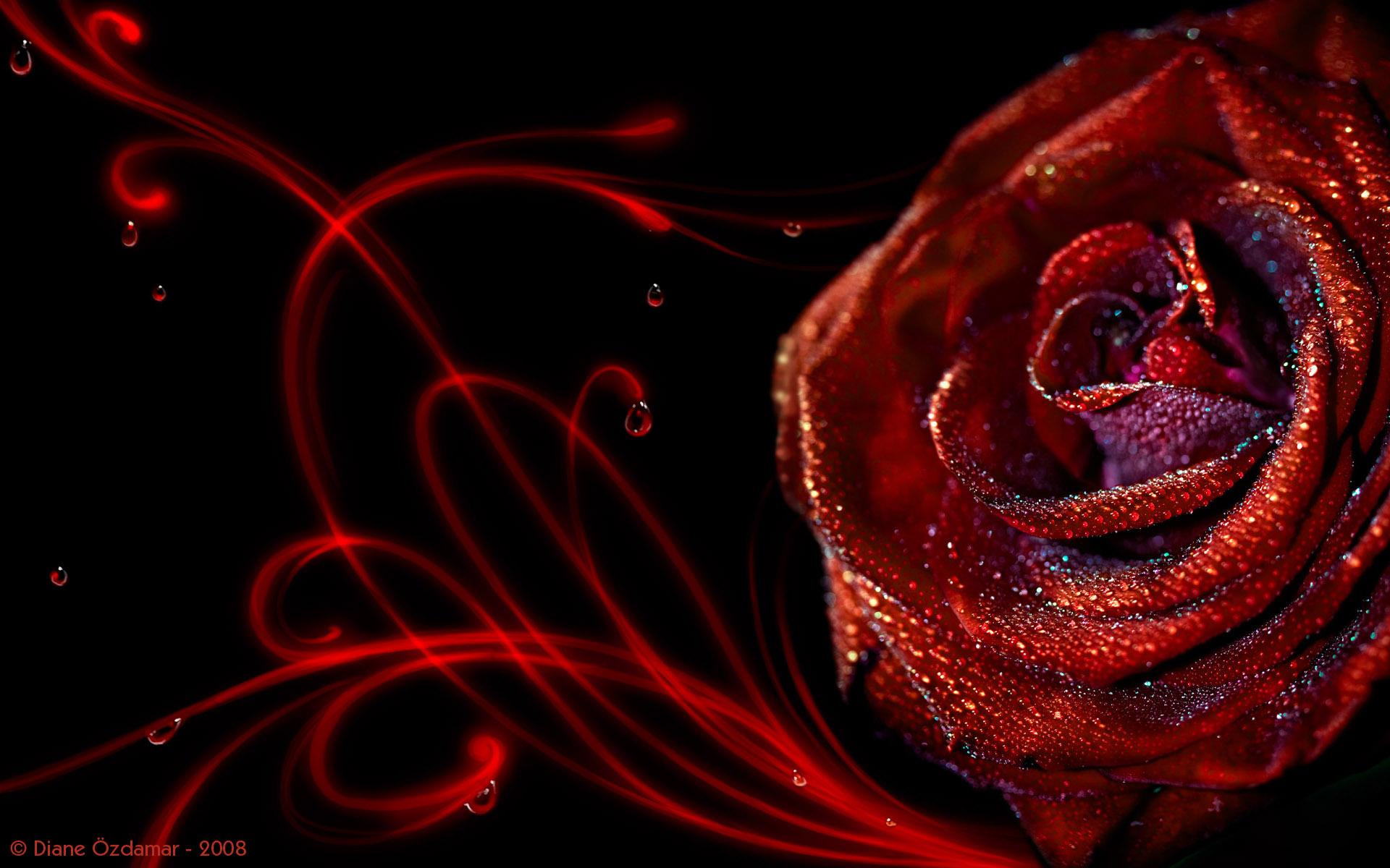 3d Rose Wallpapers Free Download 1344x870 Download Hd Wallpaper Wallpapertip