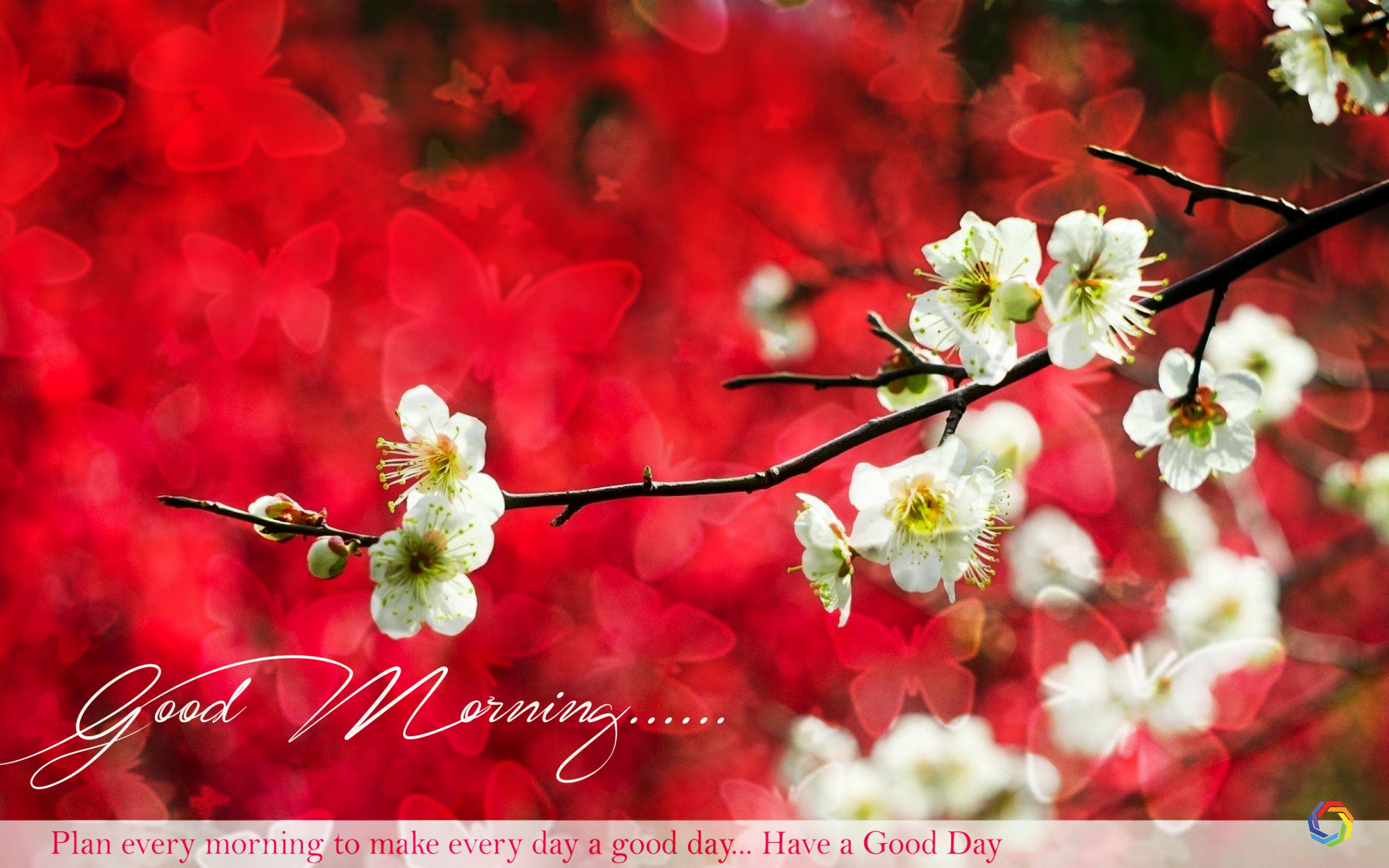 Full Hd Good Morning 2560x1600 Download Hd Wallpaper Wallpapertip