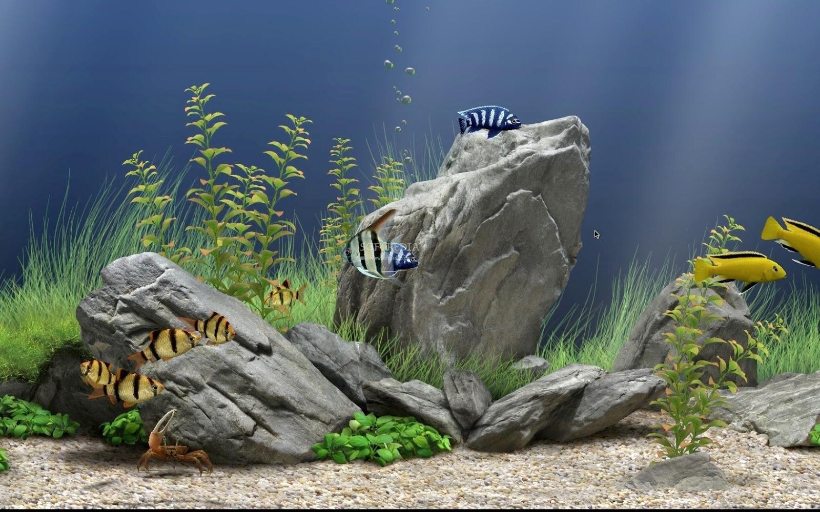 Download Wallpaper Aquarium Bergerak Untuk Windows Dream Aquarium 1600x1000 Download Hd Wallpaper Wallpapertip