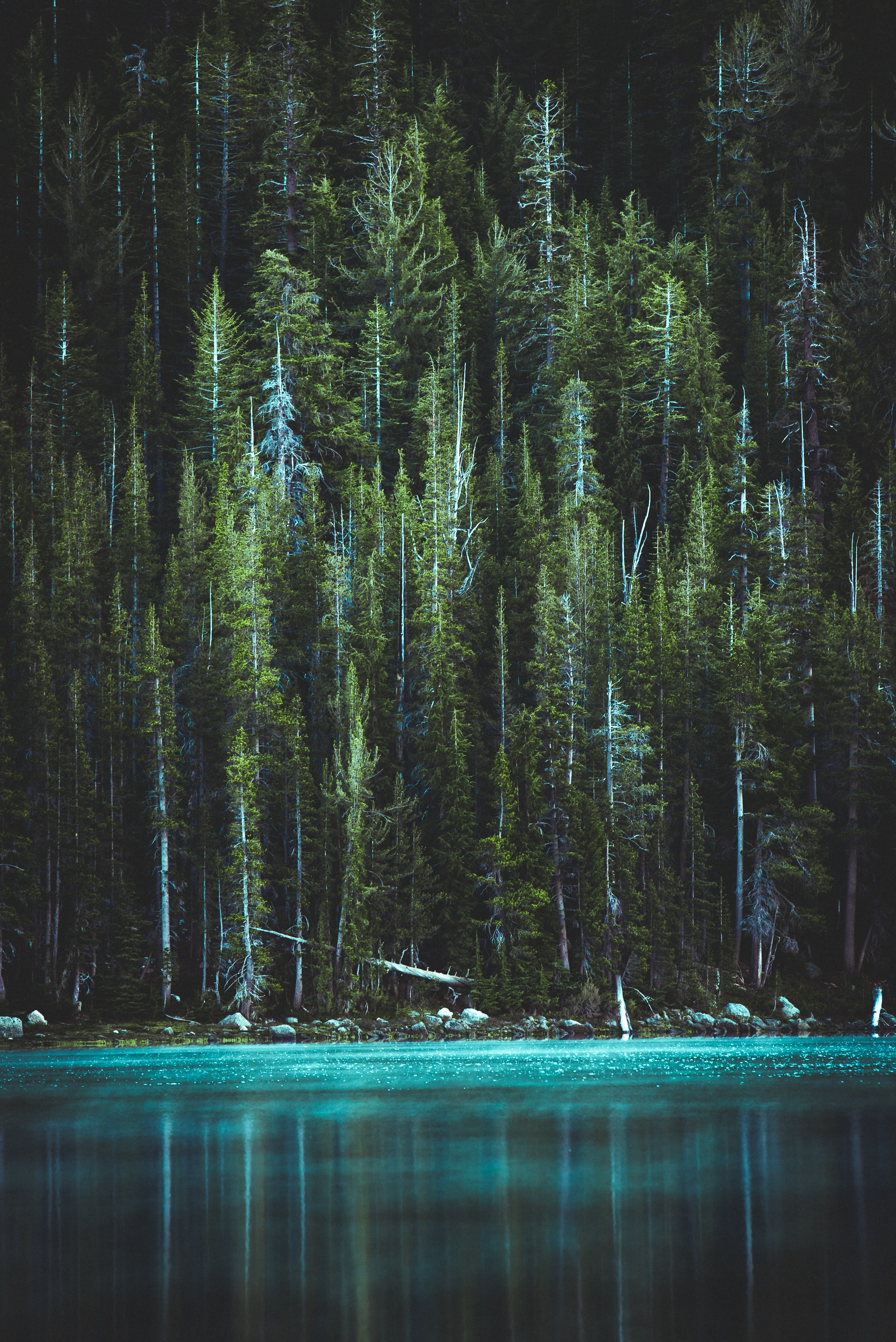 Pine Trees And Blue Lake Green Wallpaper 4k Iphone 3654x5473 Download Hd Wallpaper Wallpapertip