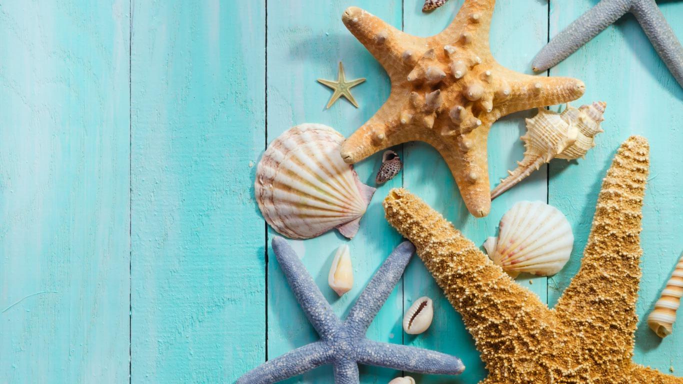 貝殻の背景 シェル壁紙 1366x768 Wallpapertip