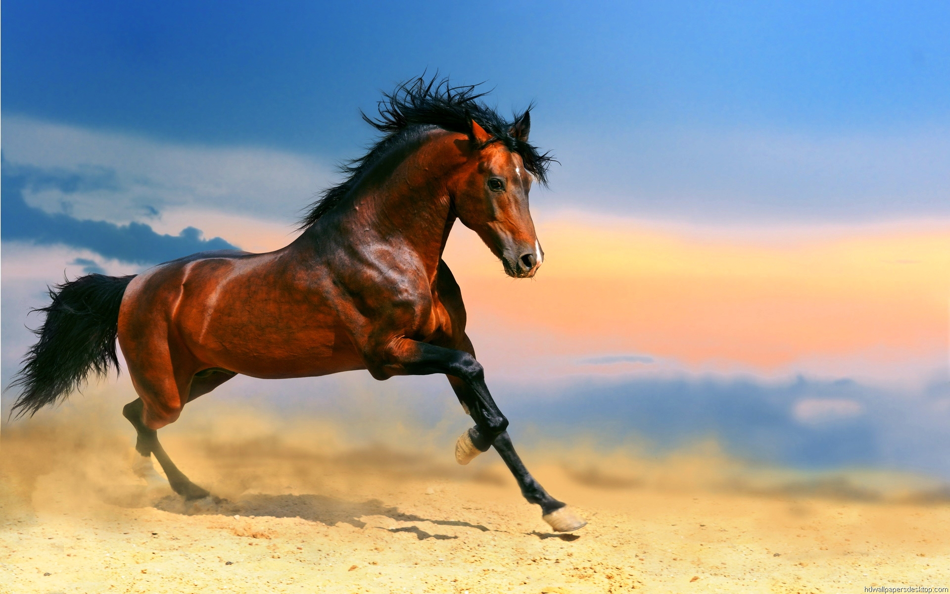 Free Horse Wallpaper Wild Horse Running High Quality 1920x1200 Download Hd Wallpaper Wallpapertip