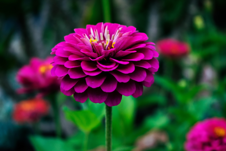 Macro Photography Of Red Petal Flower Flower Around The World 6000x4000 Download Hd Wallpaper Wallpapertip