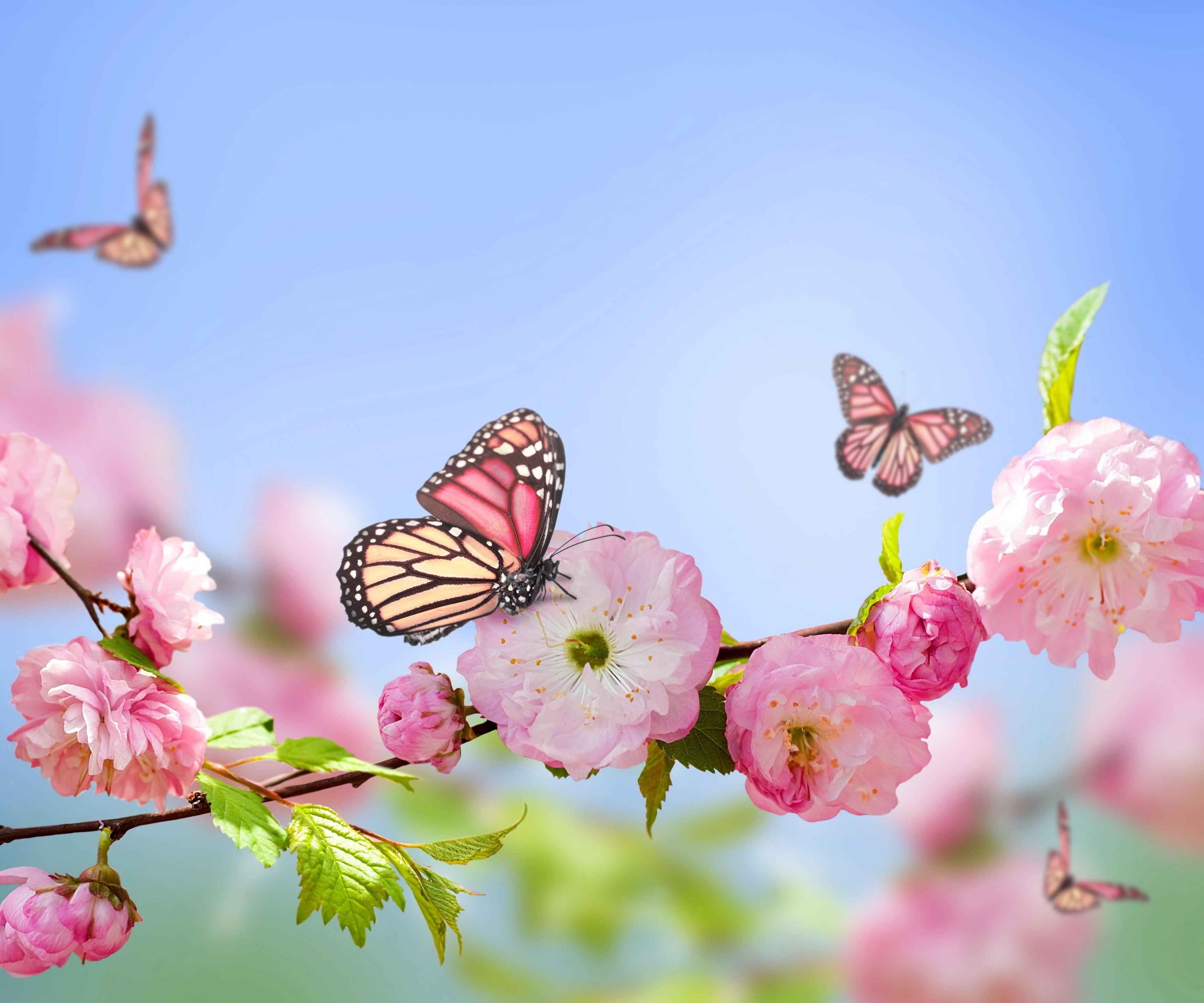 spring wallpaper backgrounds - HD 1920×1599