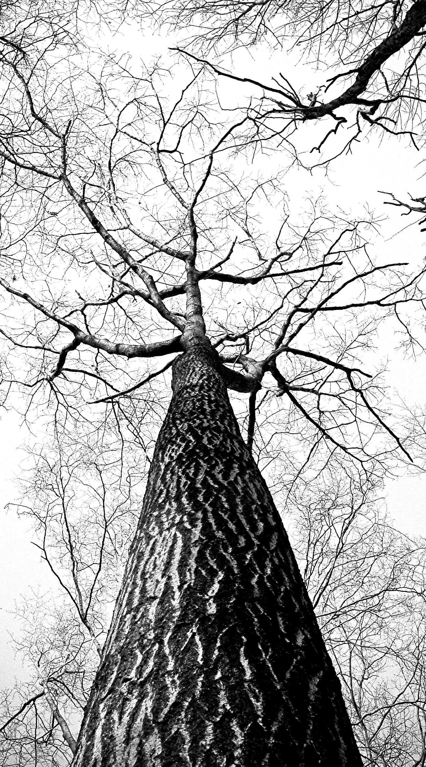 Iphone Wallpaper Free Download Black And White Tree Hd 1438x2592 Download Hd Wallpaper Wallpapertip