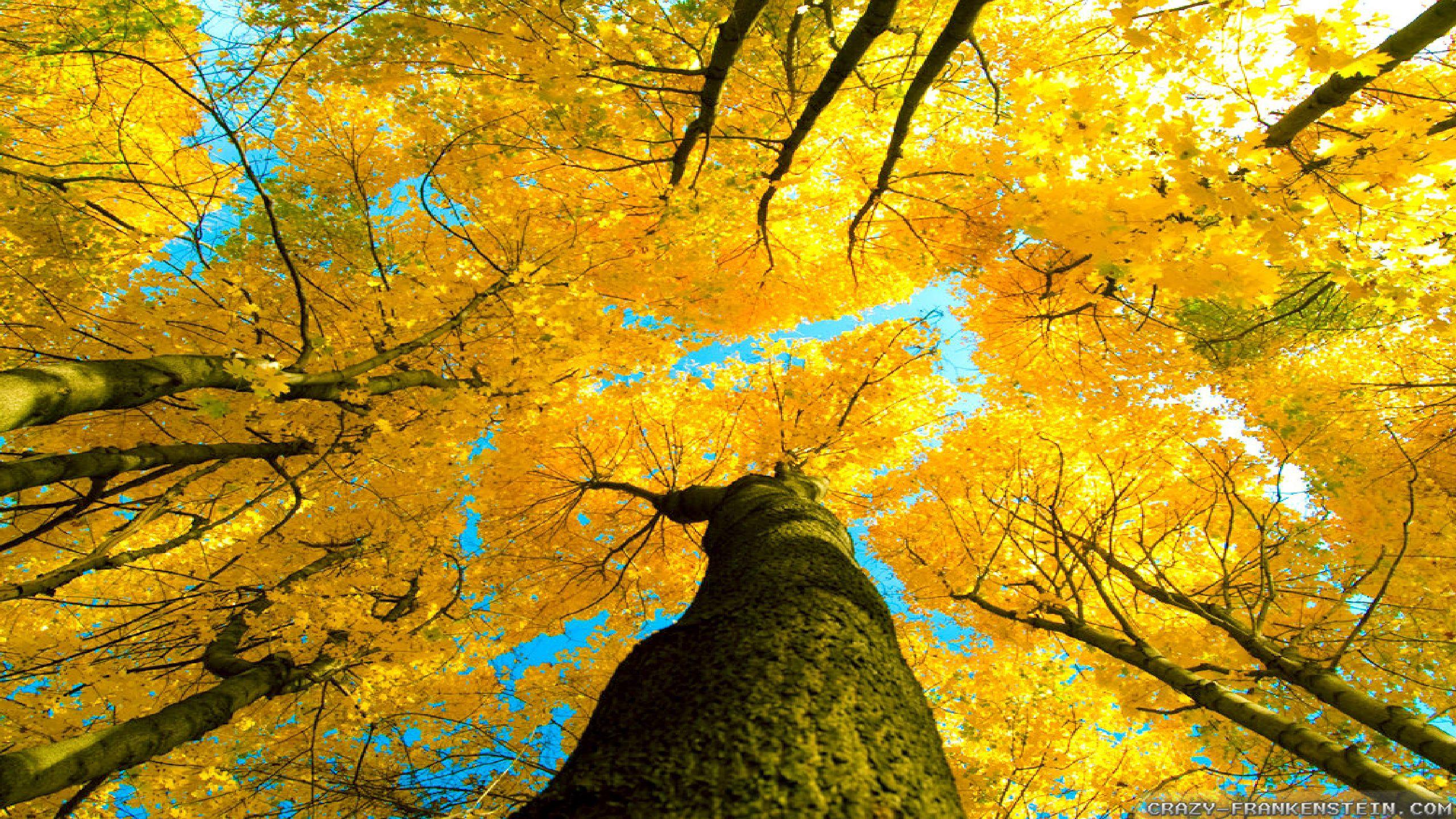 Autumn Sky Wallpaper Full Hd Is 4k Wallpaper 2560x1440 Download Hd Wallpaper Wallpapertip