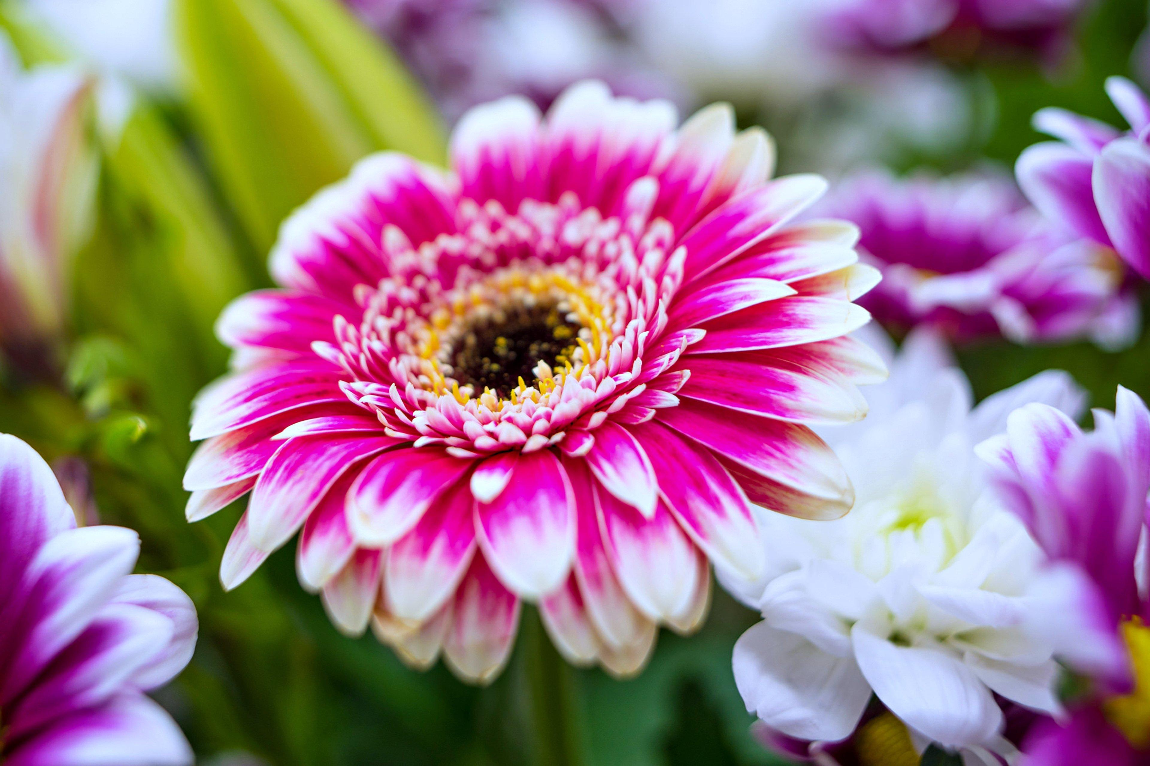 Beautiful Flower Full Hd 3840x2559 Download Hd Wallpaper Wallpapertip