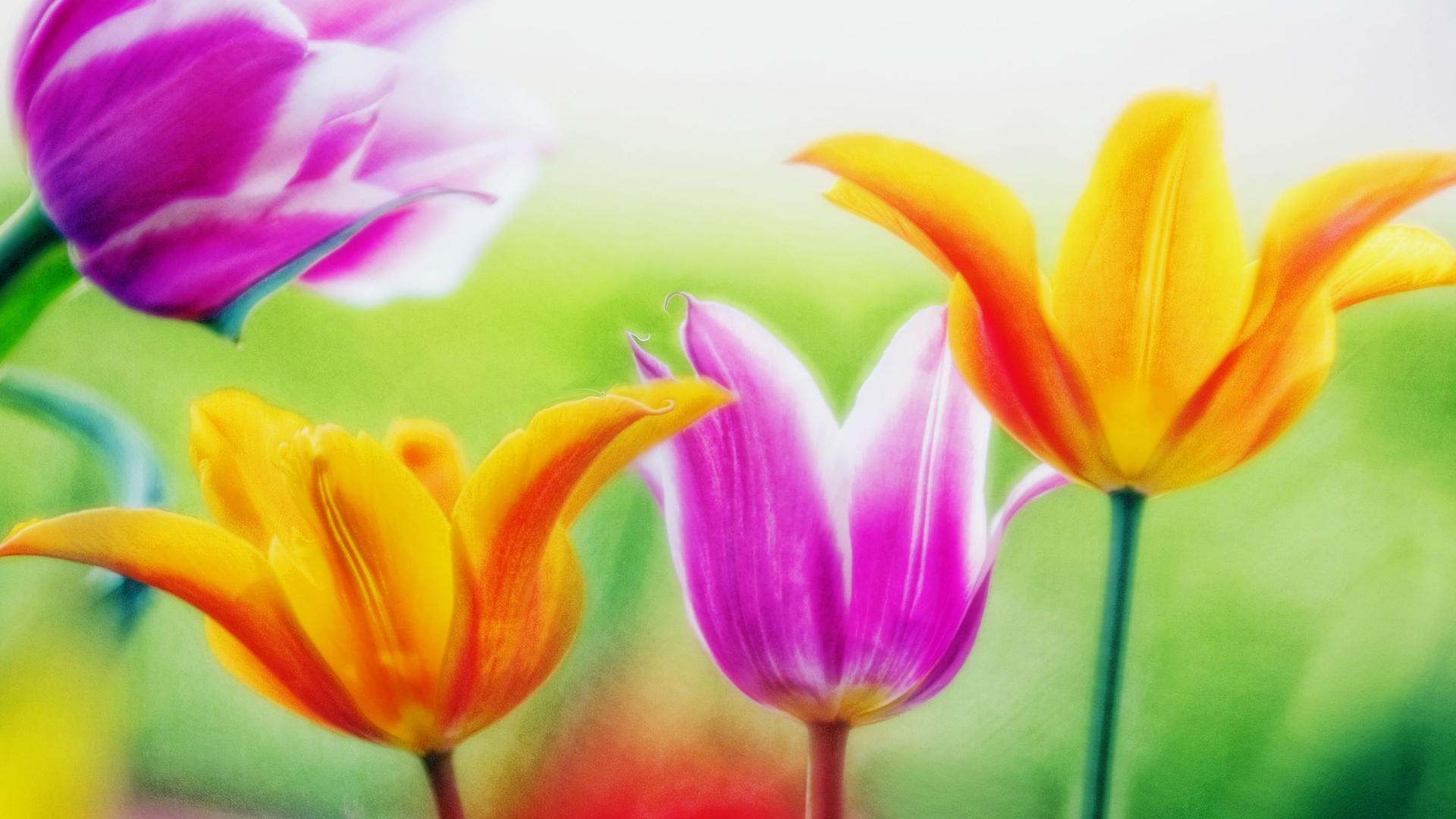 Flowers Wallpaper Full Size 1920x1080 Download Hd Wallpaper Wallpapertip