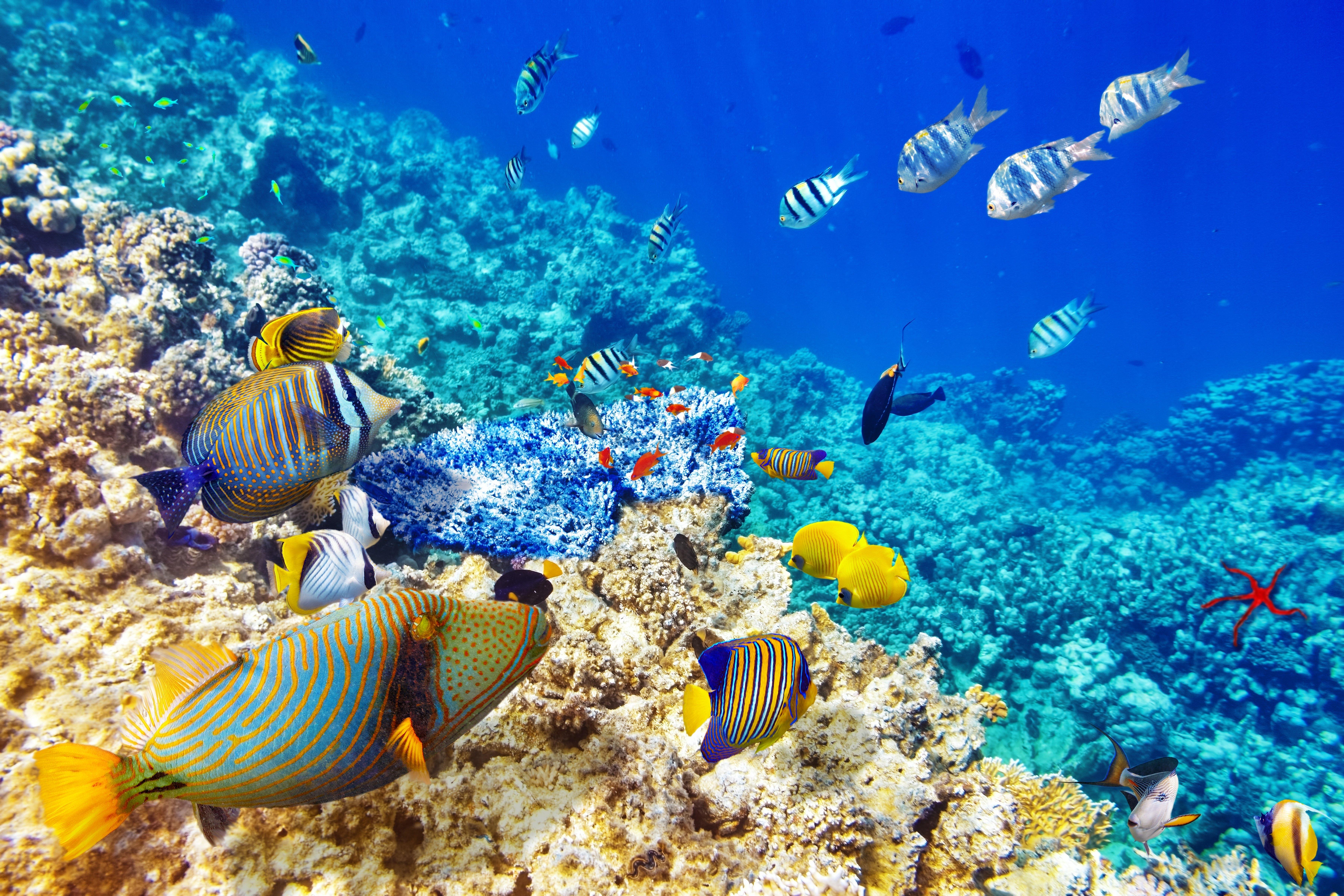 Coral Reef Wallpaper Hd - 3840x2400 - Download HD ...