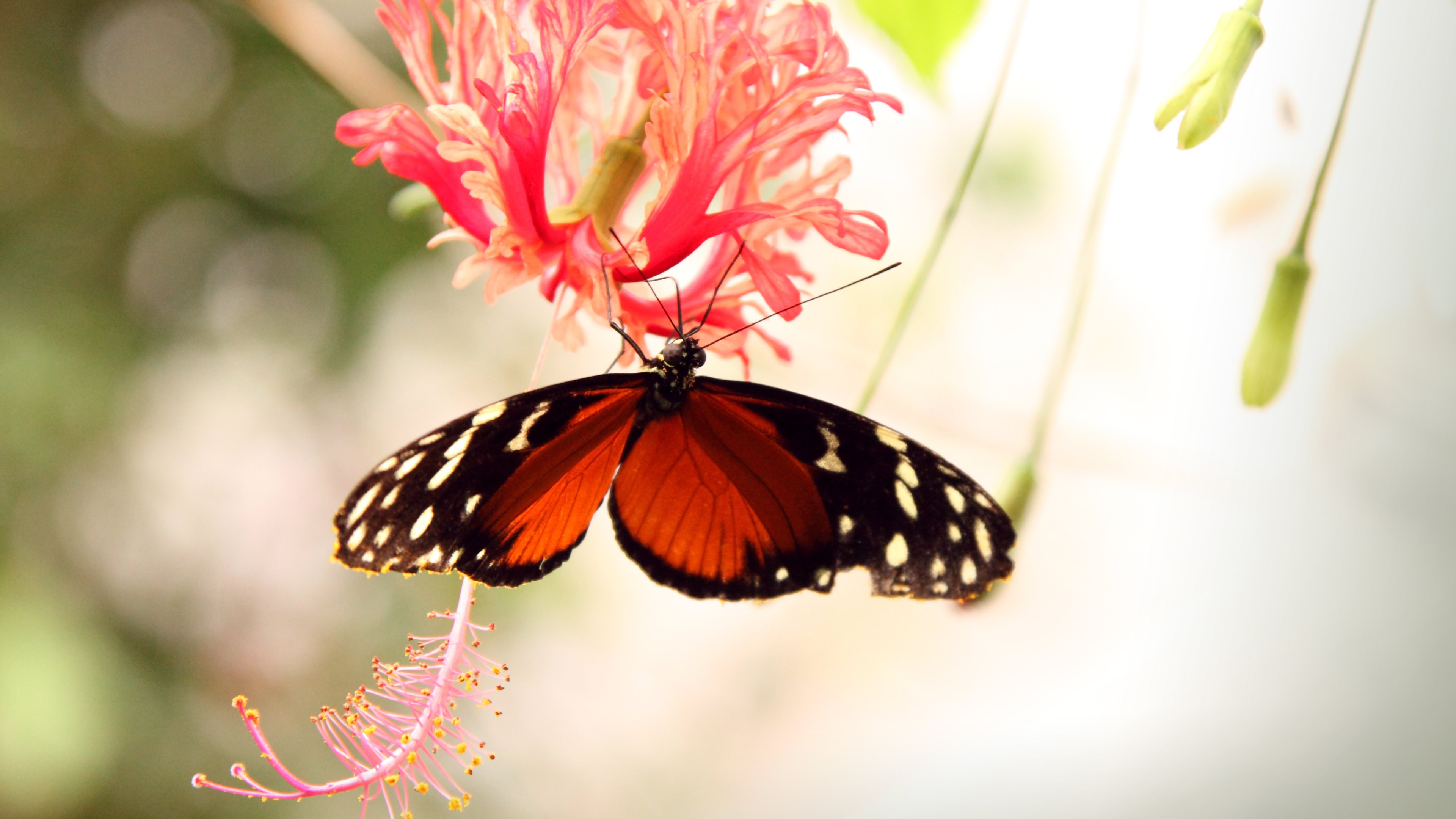 Full Hd Butterfly Wallpapers 4k 3840x2160 Download Hd Wallpaper Wallpapertip