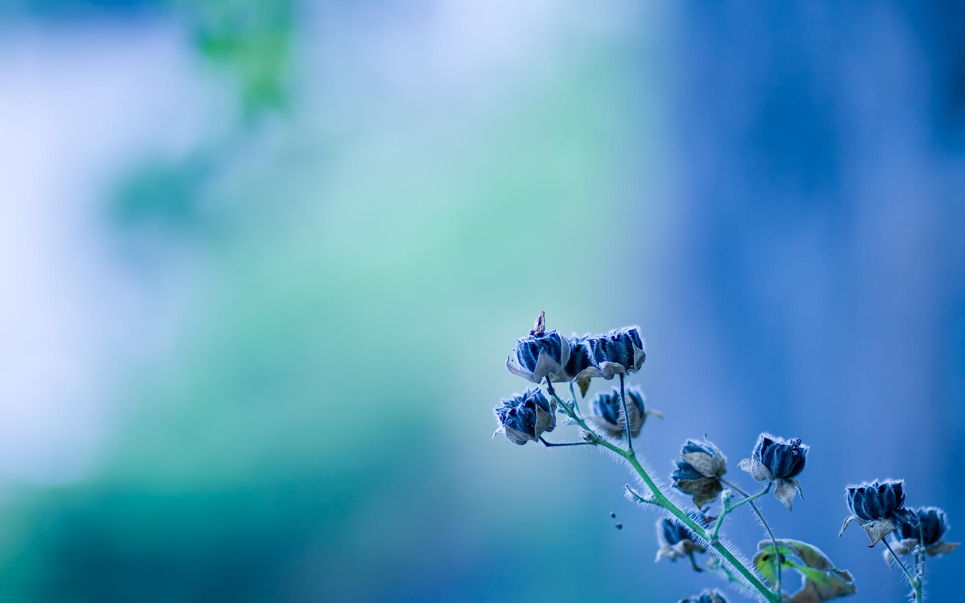 Flowers Blur Background Hd 1920x1200 Download Hd Wallpaper Wallpapertip