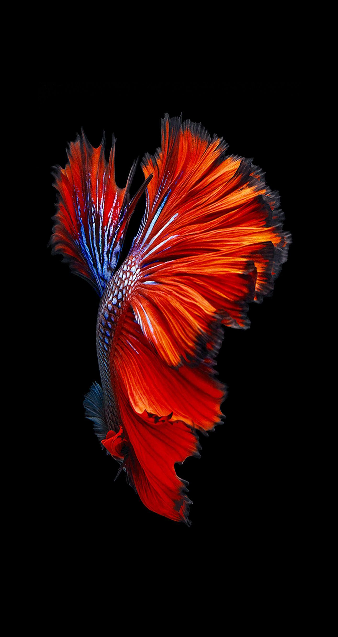 iPhone 21   iPhone Fisch Wallpaper   21x221212   WallpaperTip