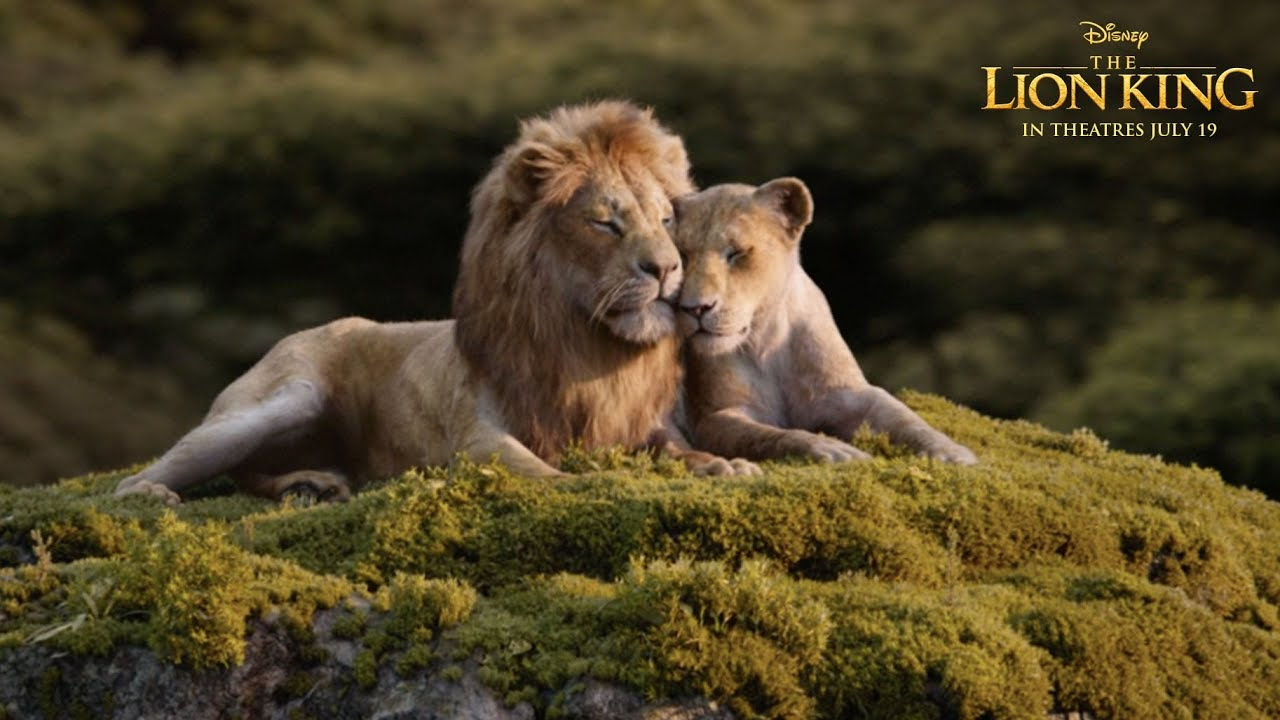 Lion King 2019 Can You Feel The Love Tonight 1280x720 Download Hd Wallpaper Wallpapertip