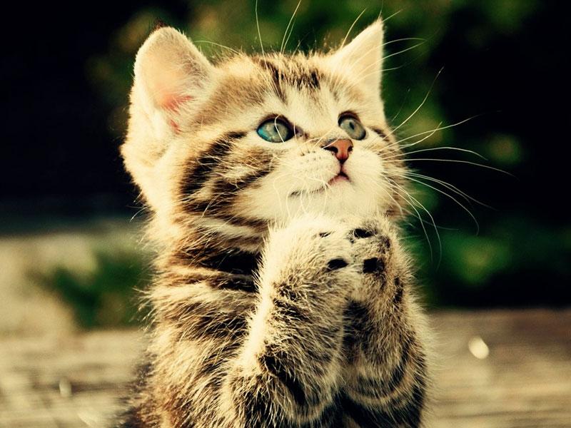 Funny Wallpaper - Cat Praying To God - 800x600 - Download HD Wallpaper -  WallpaperTip
