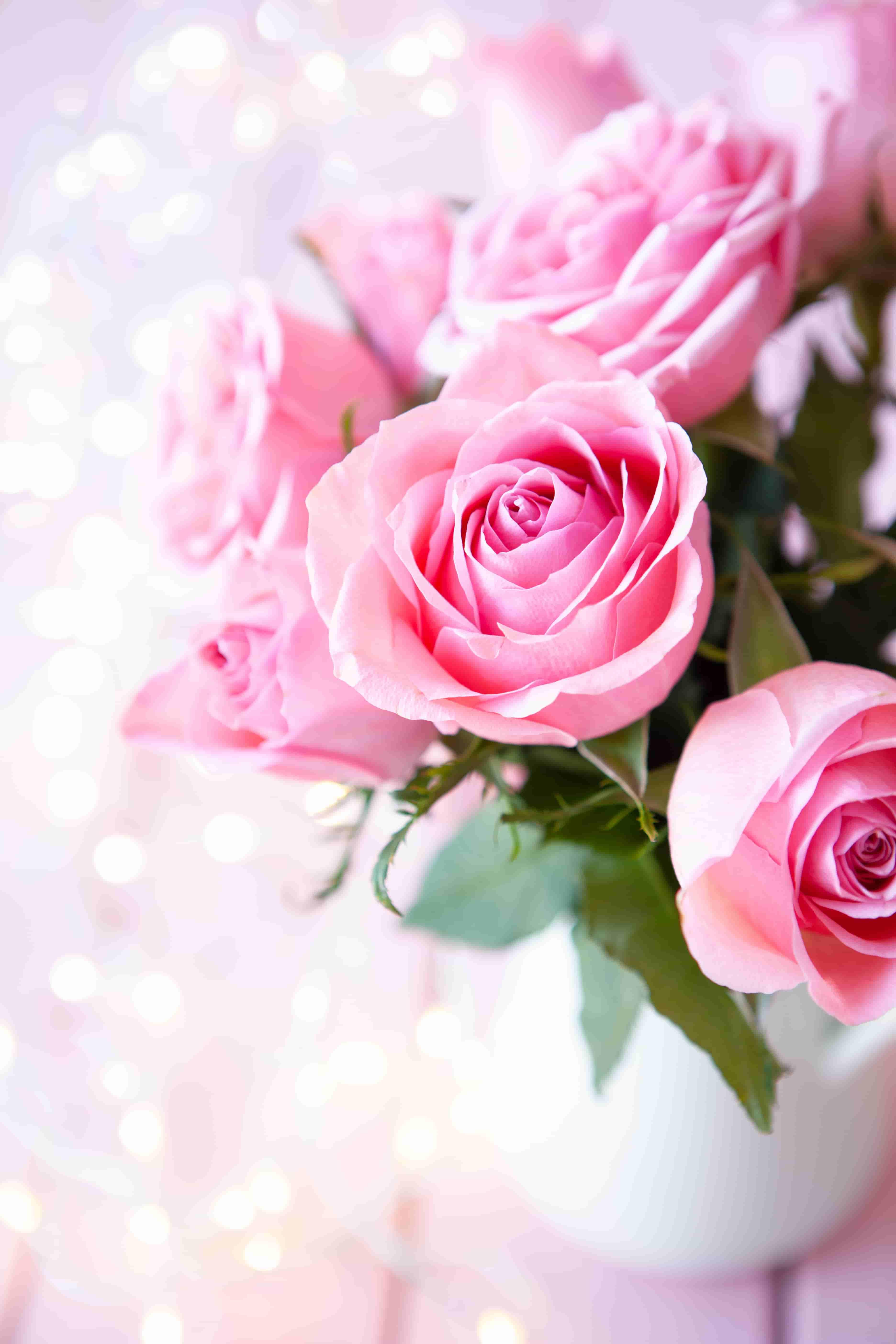 Pink Rose Wallpaper In Hd 3744x5616 Download Hd Wallpaper Wallpapertip