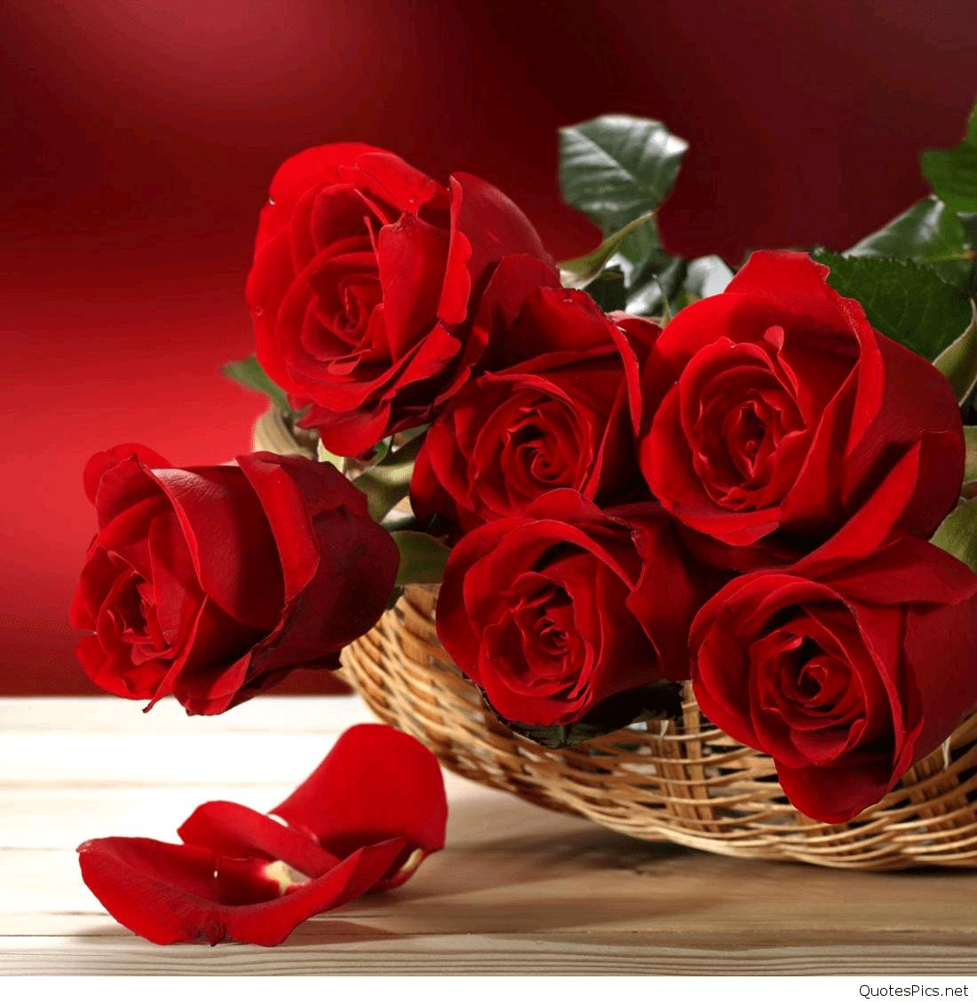 Love Rose Wallpaper 1100x1130 Download Hd Wallpaper Wallpapertip