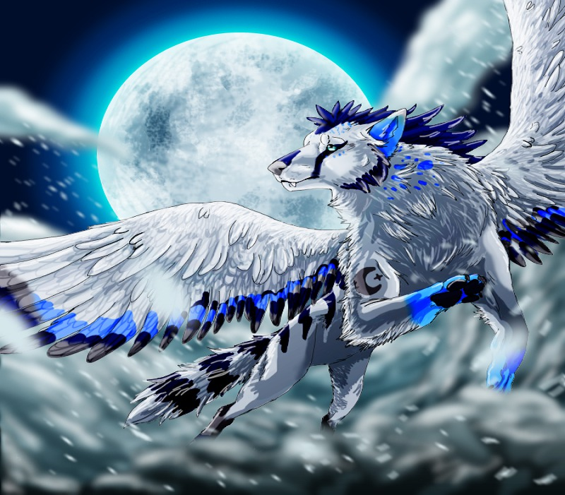 Cool Winged Wolf Wallpapers Anime Wolf With Wings 800x701 Download Hd Wallpaper Wallpapertip