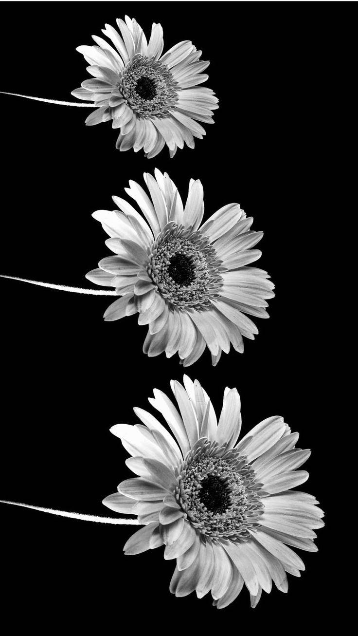 schwarze und weiße Sonnenblume   iPhone Wallpaper Tumblr HD ...
