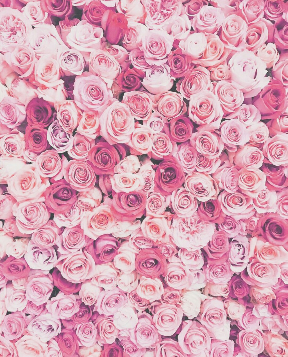 rosa Rosen Tumblr Hintergrund   rosa Tapete tumblr   20x20 ...