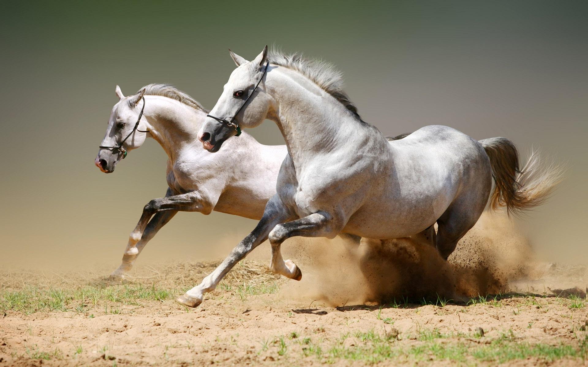 Running Horse 1600x1000 Download Hd Wallpaper Wallpapertip