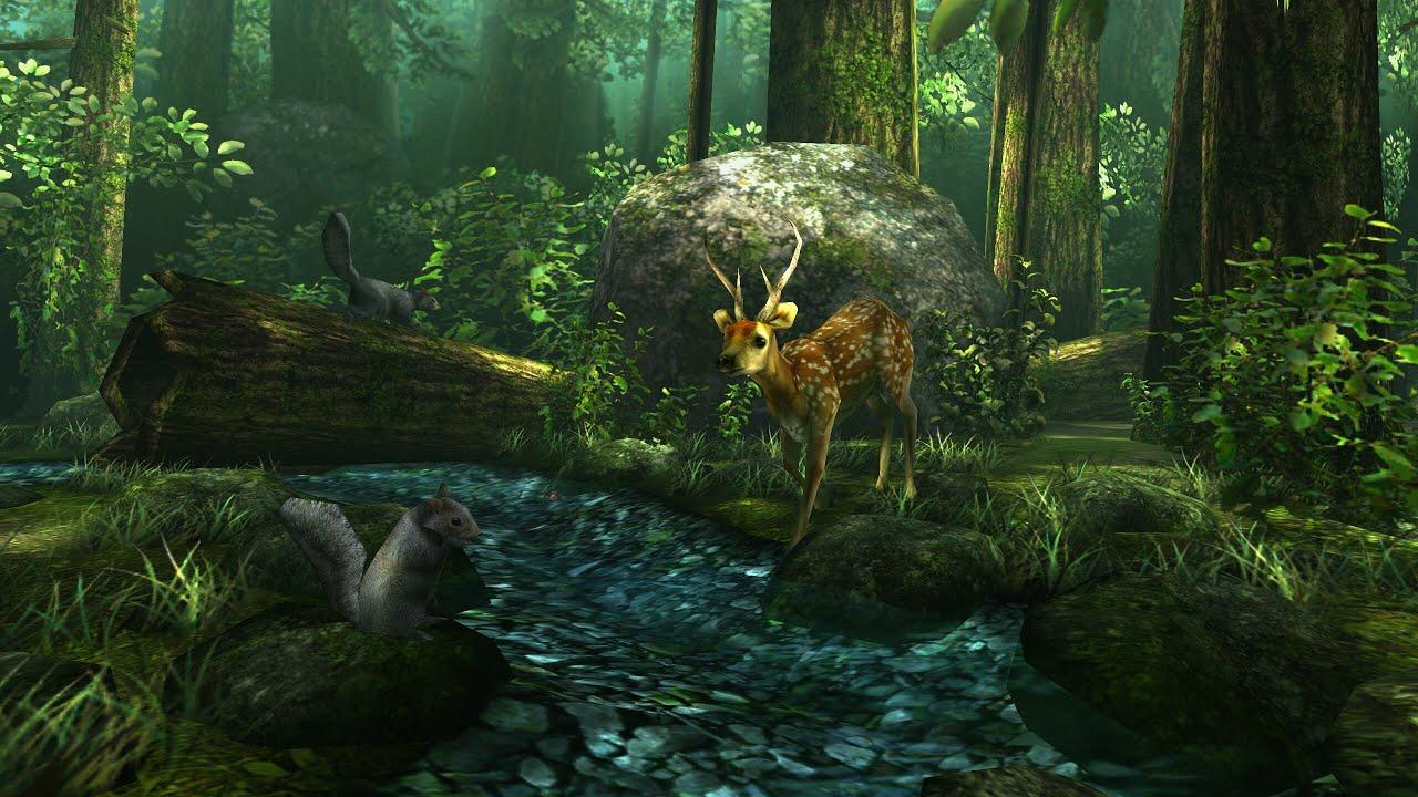 Live Wallpaper Forest 1280x720 Download Hd Wallpaper Wallpapertip