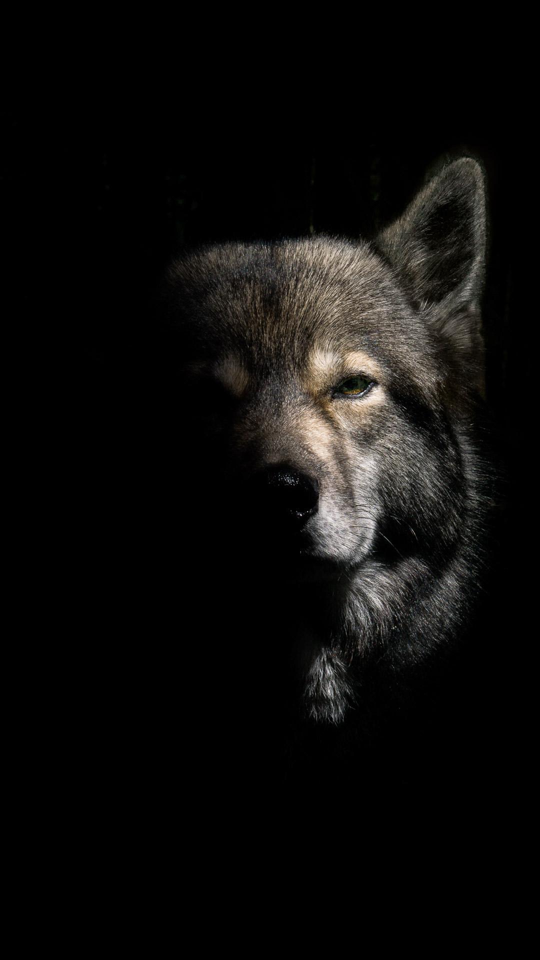 Wolf Phone Wallpaper - 1080x1920 ...